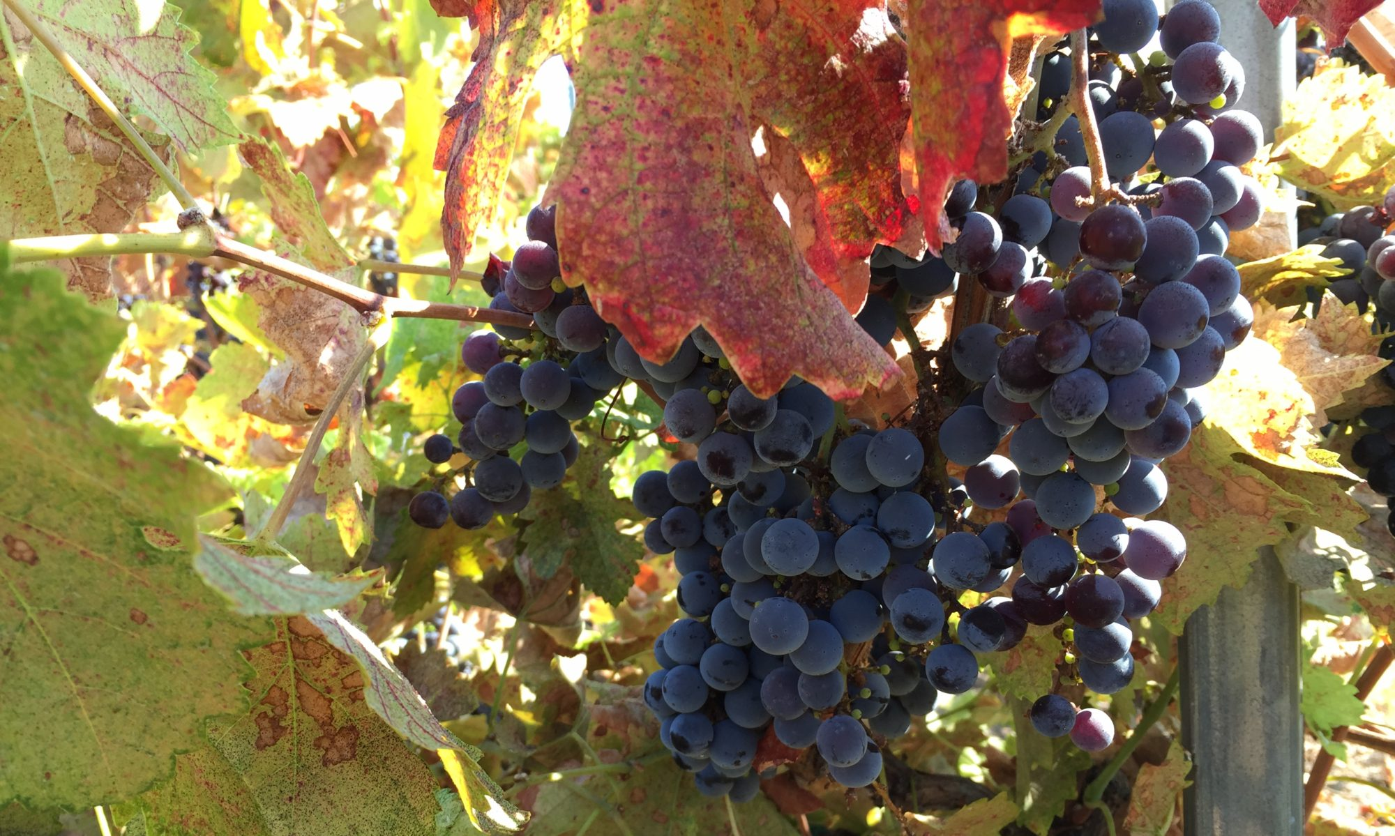 Vista Serrano Vineyard